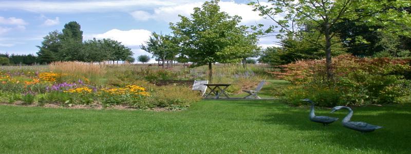 jardin été 2010 084.jpg