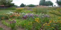 jardin été 2010 148.jpg