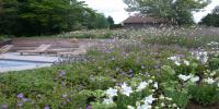 jardin été 2010 151.jpg